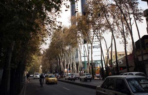 نگین خودرو قاتل درختان خیابان ولیعصر نقره داغ شد